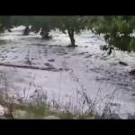 Furtuna in Italia